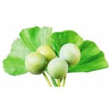 Ginkgo Leaf (Yin Xing Ye) (60 vegetarian Capsules/bottle)