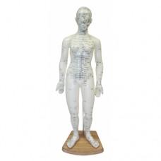 Meridian Acupuncture Model (Female) 50cm