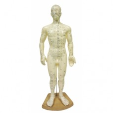 Meridian Acupuncture Models (Male) 50cm